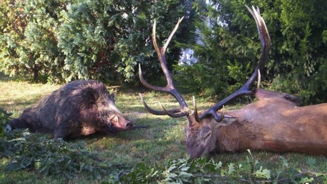 тваринний світ угорщини
