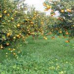 Австрія – знаменитий Цитрусовий сад – Відпочивай з нами !