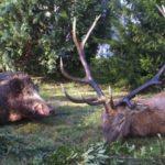 Тваринний світ Угорщини — Відпочивай з нами !