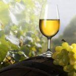 Кримське виноробство — Відпочивай з нами !