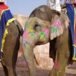 Горящая путевка в Индию (Гоа) от 829$